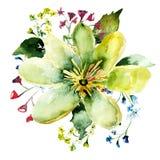 Beautiful wild flower. Watercolor illustration Stock Photo