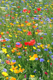 Beautiful wild flowers. Beautiful wild flowers growing together in a field Stock Photos