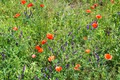 Beautiful wild flowers Stock Photography