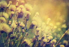 Beautiful wild flowers. Stock Photography