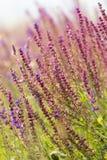Beautiful wild flowers Stock Image