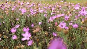 Beautiful wild flowers closeup stock video footage