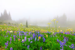 Beautiful wild flowers field with lake Royalty Free Stock Photos