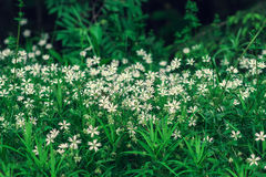 Beautiful wild flowers in the forest. royalty free stock photo
