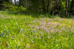 Beautiful wild flowers on glade in spring forest Stock Photo