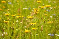 Beautiful wild flowers. Stock Image