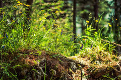Beautiful wild flowers growing on an old snag tree Stock Photography
