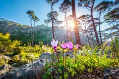 Beautiful wild flowers royalty free stock photography