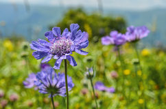 Beautiful wild flowers in a landscape. Beautiful purple wild flowers in a landscape Stock Photo