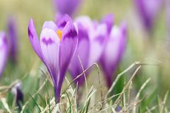 Beautiful  wild flowers of spring Stock Images