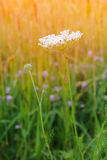 Beautiful wild flowers Stock Image
