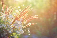 Beautiful wild flowers. Stock Images