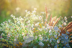 Beautiful wild flowers. Stock Photo
