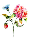Beautiful wild flowers Royalty Free Stock Images