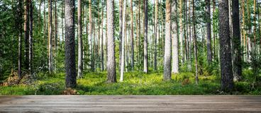 Beautiful wild forest Stock Image