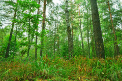 Beautiful wild forest. Stock Photos