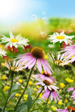 Beautiful wild fresh colorful flowers. Royalty Free Stock Photos