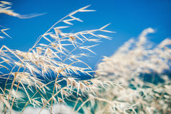 Beautiful wild grass on the sea coast. royalty free stock photos