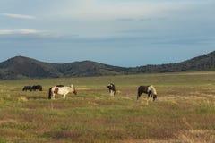 Beautiful Wild Horses in Summer Royalty Free Stock Photos