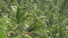 Palm trees against the sky or sea 1 stock footage
