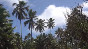 Palm trees against the sky or sea 6 stock footage