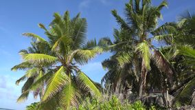 Palm trees against the sky or sea 13 stock video footage
