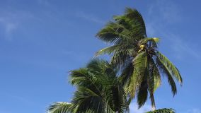 Palm trees against the sky or sea 9 stock video footage
