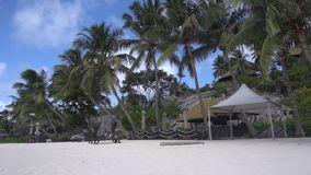 Palm trees against the sky or sea stock video footage