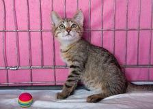 Free Beautiful Wild Kitten At A Local Animal Shelter Stock Photos - 26276553