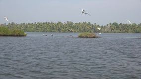 Beautiful wild nature 4k seascape of calm lagoon lake with tropical island in the background in Kerala Backwaters India. Beautiful wild nature seascape of calm stock video