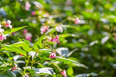 Beautiful wild pink flowers Stock Images