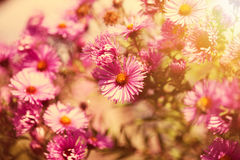 Beautiful wild pink flowers in the sunshine Stock Photography