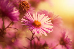 Beautiful wild pink flowers in the sunshine Stock Image
