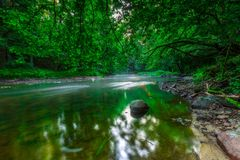 Beautiful wild river in summertime green forest Royalty Free Stock Images
