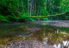 Beautiful wild river in summertime green forest Royalty Free Stock Photos