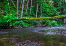 Beautiful wild river in summertime green forest Royalty Free Stock Image