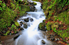 Beautiful wild stream Stock Image