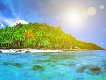Beautiful wild subtropical isle with palm trees Royalty Free Stock Image