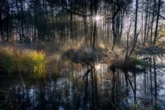 Beautiful wild swamps sunrise landscape. Stock Photography