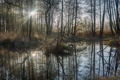 Beautiful wild swamps sunrise landscape. Royalty Free Stock Image