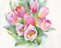 Tulips. Beautiful wild tulips painted in watercolor Royalty Free Stock Photo