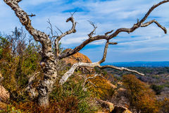 A Beautiful Wild Western View with a Gnarly Dead Tree, a View of Turkey Peak on Enchanted Rock, Texas. Royalty Free Stock Photos