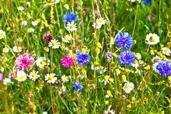 Beautiful wildflower meadow Stock Photo