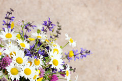 Beautiful wildflowers Royalty Free Stock Images
