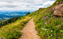 Free Beautiful Wildflowers Blooming Along The Hillside In Washington Stock Photo - 130572100