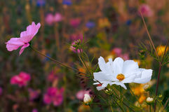 Beautiful wildflowers blooming at spring time Stock Photo