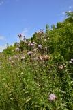 Beautiful wild flowers stock photos