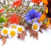Beautiful wildflowers, chamomiles, chrysanthemums, cornflower Royalty Free Stock Photos