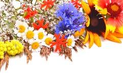 Beautiful wildflowers, chamomiles, chrysanthemums, cornflower Royalty Free Stock Photography