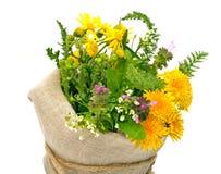 Beautiful wildflowers, chamomiles, milfoil Stock Photography